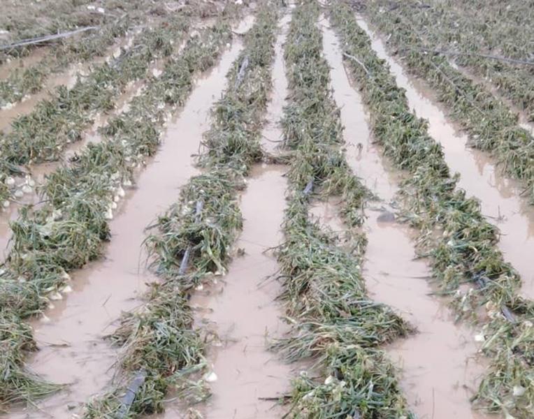 خسارت ۹۶ میلیاردریالی به بخش های کشاورزی شهرستان کرمان